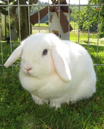 Zwergwidder Kaufen Zwerg Kaninchen Kaufen Zwerg Kaninchen